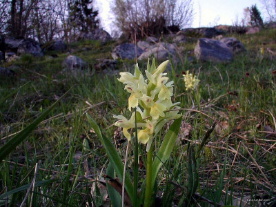 Tapeta: Kouzelné orchideje 9