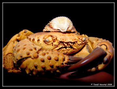Tapeta: Krabík