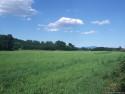 Tapeta Krajina Piemonte 2
