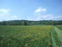 Tapeta Krajina Piemonte 7