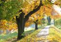 Tapeta Krajina-podzim21