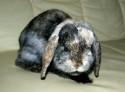 Tapeta králík 1
