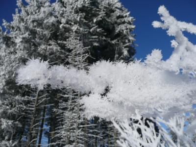 Tapeta: krása od zimní královny
