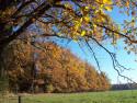 Tapeta Krása podzimu