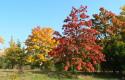 Tapeta Krása podzimu_01