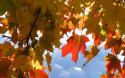 Tapeta Krása podzimu 2008