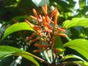 Tapeta Květina