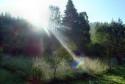 Tapeta Krásné jarní ráno