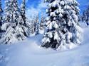 Tapeta Krásy zimy 10