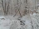 Tapeta Krásy zimy 14