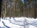 Tapeta Krásy zimy 15