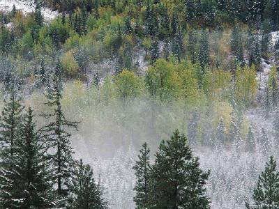 Tapeta: Krásy zimy 18