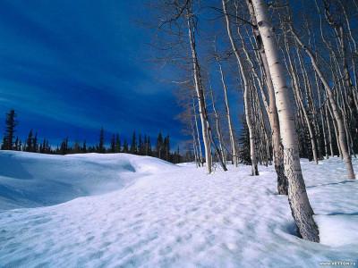 Tapeta: Krásy zimy 19