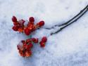 Tapeta Krásy zimy 2