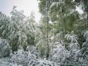 Tapeta Krásy zimy 20
