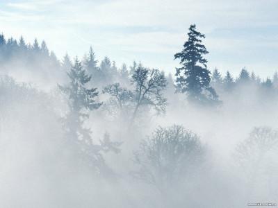 Tapeta: Krásy zimy 3