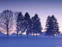 Tapeta Krásy zimy 5