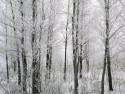 Tapeta Krásy zimy 7