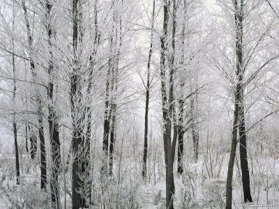 Tapeta: Krásy zimy 7