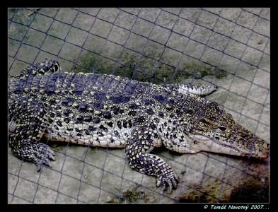 Tapeta: Krokodýl-ZOO Lešná Zlín