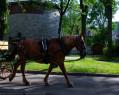 Tapeta Kůň
