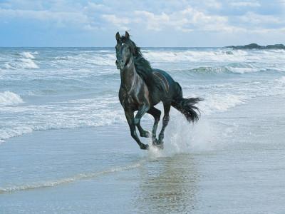 Tapeta: Kůň na pláži