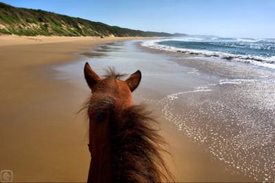 Tapeta: Kůň u moře