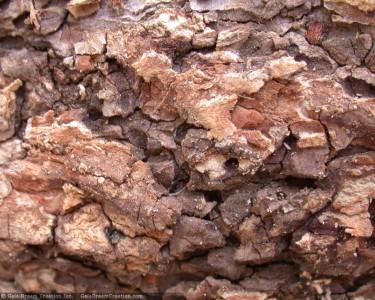 Tapeta: Kůra stromu 5