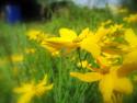 Tapeta Květ16