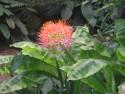 Tapeta Květ DK