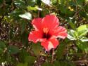 Tapeta květ GC 2