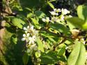 Tapeta Květ střemchy