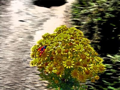 Tapeta: Květina7