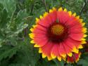 Tapeta květina xp