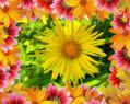 Tapeta květinová