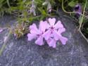 Tapeta Květinová výzdoba
