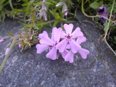Tapeta: Květinová výzdoba