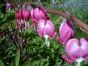 Tapeta Květinová výzdoba 10