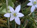 Tapeta Květinová výzdoba 11