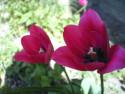 Tapeta Květinová výzdoba 12