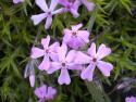 Tapeta Květinová výzdoba 13