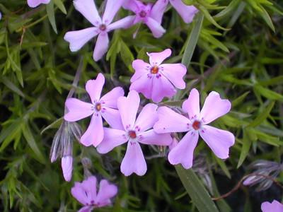 Tapeta: Květinová výzdoba 13