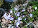 Tapeta Květinová výzdoba 3