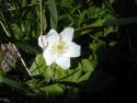Tapeta Květinová výzdoba 4