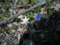 Tapeta Květinová výzdoba 6