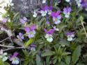 Tapeta Květinová výzdoba 7