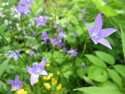 Tapeta Květinové pole