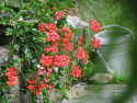 Tapeta květinové zátiší