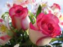 Tapeta květiny