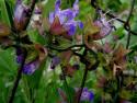 Tapeta Květiny :-) 1
